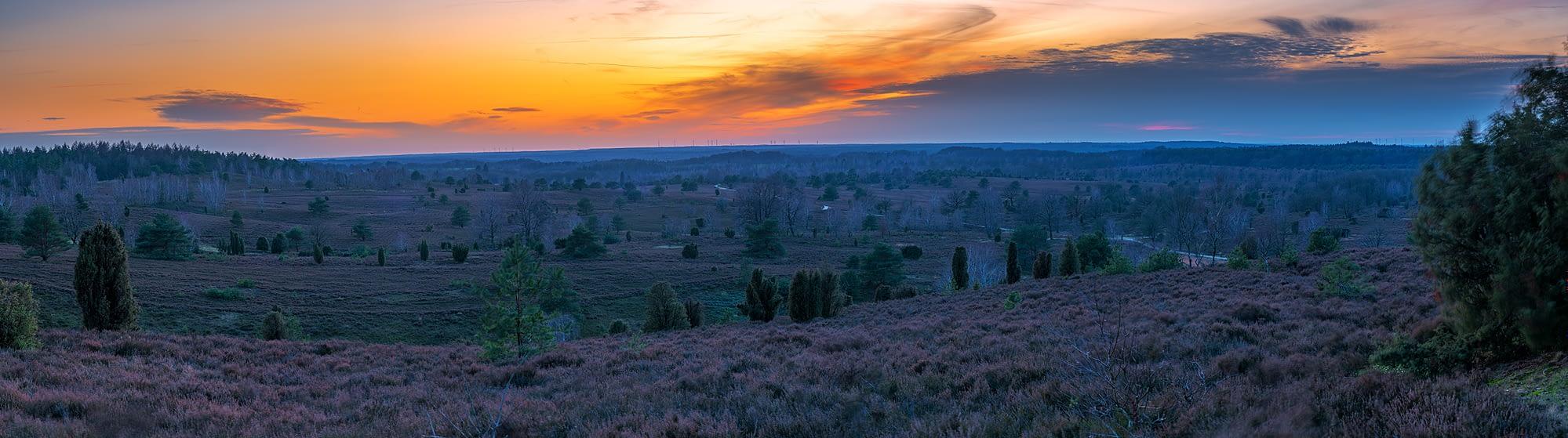 Wilseder Berg Lüneburger Heide zum Sonnenuntergang Panorama