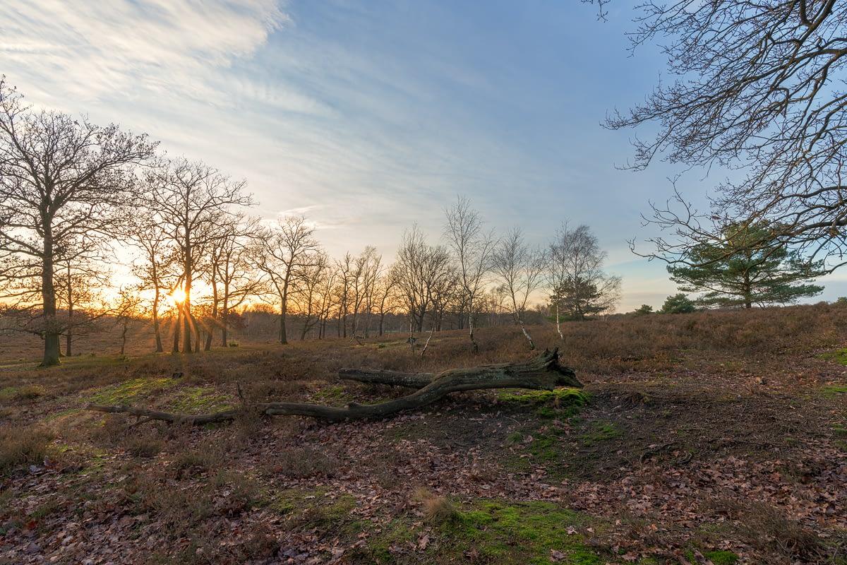 Auf dem Weg zum Wilseder Berg in der Lüneburger Heide