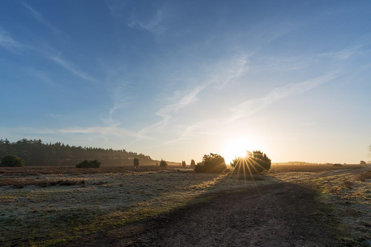 Wacholderwald in der Teufelsheide zum Sonnenaufgang Südheide Lüneburger Heide