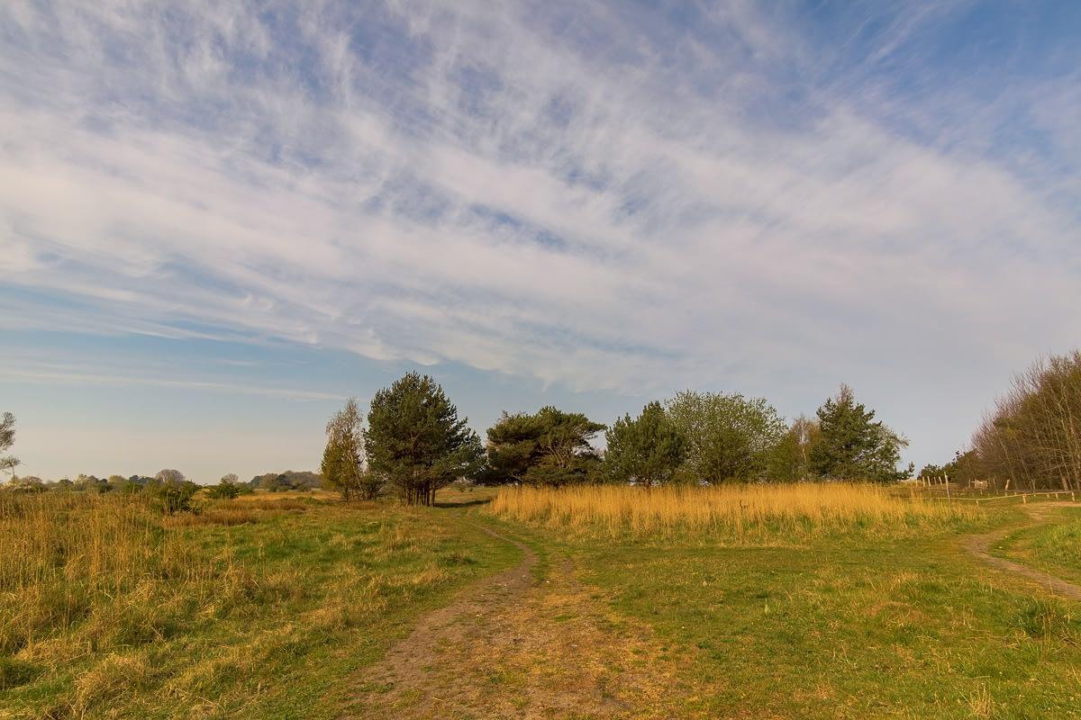 Kreptitzer Heide